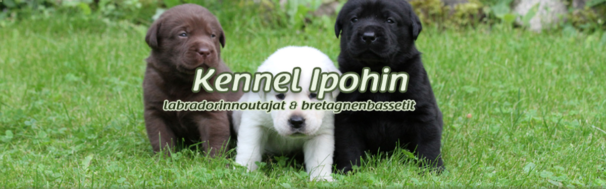 Kennel Ipohin
